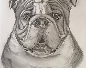 Graphite drawing of British Bulldog