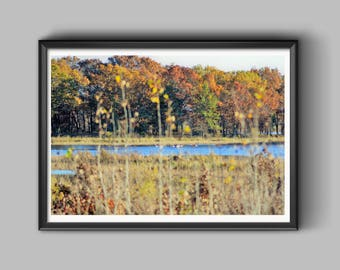 Nature Landscape Print Photo - Wall Art Decor - Swans swimming in a Bog - Photography Colorful fall