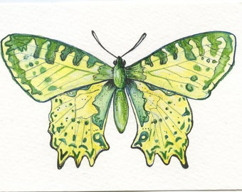 Original Green Butterfly Watercolor Painting