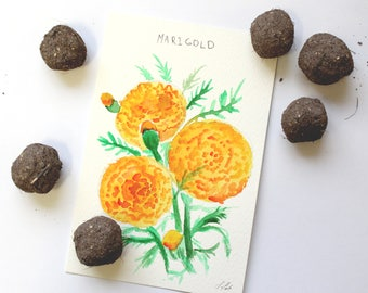 Balls of seeds ready to sow indoors or outdoors. Tagetes marigold seed bombs. Guerrilla gardening. Instructions included.