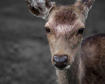 Digital Deer Photo