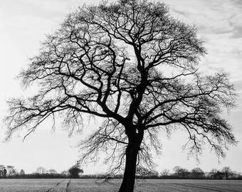 Single oak tree silhouette  - black and white photograph , Monochrome tree photograph, Black and white photographic print