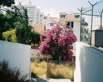 Bougainvillea, Lisbon - SML