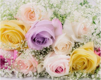 Pastel Roses Photo on Canvas, Flower Photography, Gallery Wrapped Canvas Print Sizes 8x10 Inches to 24x36 inches