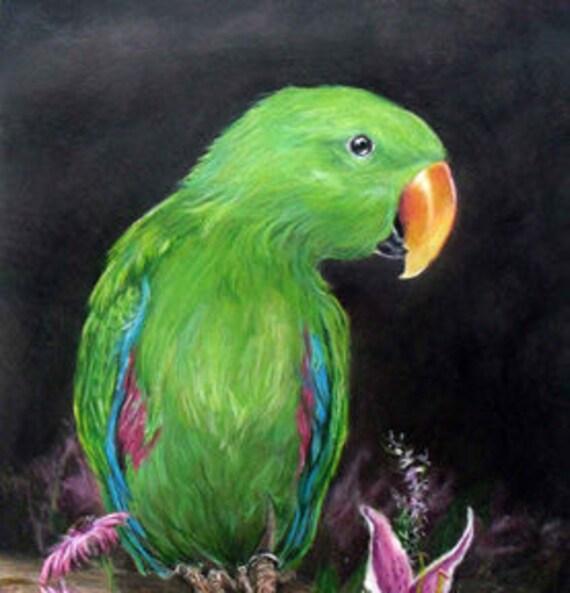 Eclectus parrot portrait drawing, 8 x 10 size