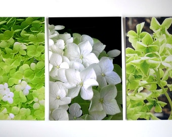 Flower photography postcard set. Floral/nature. Hydrangea green, white & black. Frame-able, affordable fine art prints