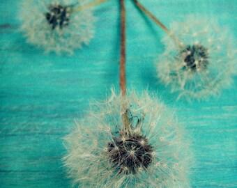 Dandelion Photograph - Whimsical Art - Aqua Blue - Minimalist - Modern Wall Art - Flower Photography - Botanical Art Print - Farmhouse Art