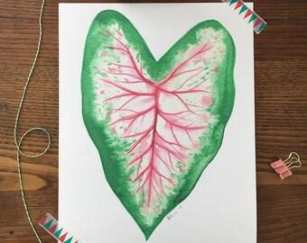 Caladium Leaf. Plant Art. Botanical Art. Watercolor Caladium Plant. House Plant Art. 8x10 Art Print. Gift Under 20. Ready to Frame Art.