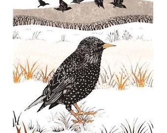 Starlings in winter