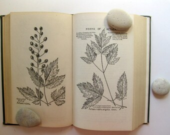 Beautiful Vintage Field Book of American Wild Flowers, 1927, Black and White Illustrations Throughout