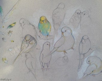 Budgie Studies *Limited Edition*