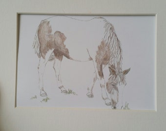 Graphite and Colored Pencil Drawing of Paint Horse.  5x7 matted