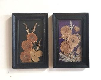 2 Bulgarian Botanical Composition Encased in Glass Old Frame Vintage 60's Dried Pressed Flowers Folk Art