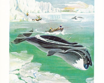 1940s Bowhead Whale Hunting Print -  Vintage Antique Animal Zoology Ocean Sea Home Decor Book Plate Art Illustration for Framing