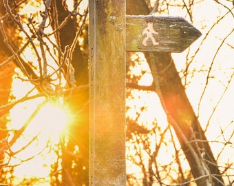 "Sunset Footpath Photo - 10x8"" - signpost, evening, sun, landscape, public footpath, woods, country, walk, walking, nature"