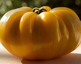 Golden Queen Tomato Seeds Organic