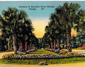 Vintage Florida Postcard - The Entrance to Silver Springs (Unused)
