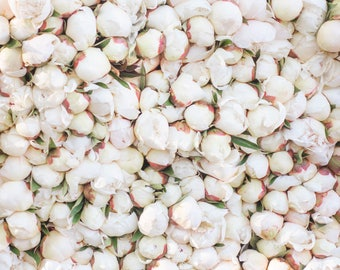Paris Photograph -  White Peony Stacks at Paris Market, Paris Flowers, Paris Travel Print, French Home Decor, Large Wall Art