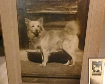 "Antique Dog Photo.  Silver Gelatin Photo. Circa 1910 Antique Cabinet Card. 7.5"" by 4"".  Cute Pet Mutt."