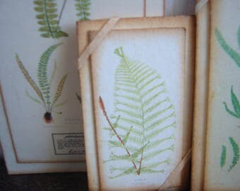 Miniature Vintage Botanical Fern Print Mounted SM for Dollhouse 1/12 Scale