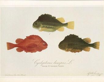 Fish Print Book Plate Sale, Buy 3, get 1 FREE