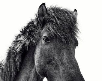 Modern Icelandic Horse Print | White Background Black and White Horse Photograph