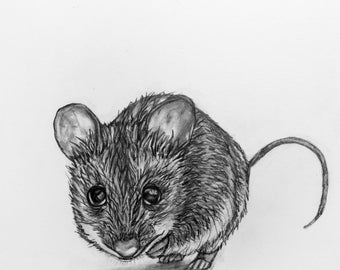 Original Mouse Pencil Drawing - 61 Mouse