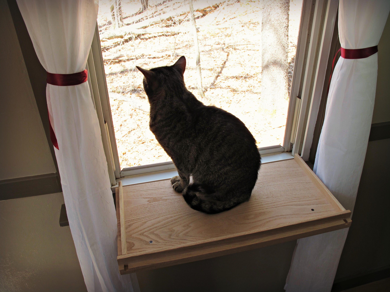 cat window perch cat shelf cat bed. Black Bedroom Furniture Sets. Home Design Ideas