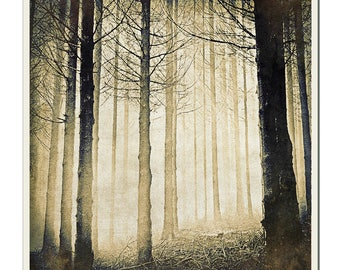 Spooky Forest - Grunged Photographic Print by Doug Armand on Etsy
