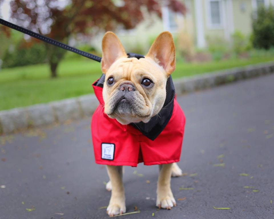 French Bulldog Rain Coat Dog Raincoat Waterproof Dog Coat