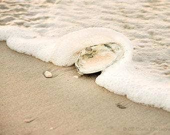 Seashell Sand and Surf Photography Print, Beach Art Print, Surf Clam Shell, Atlantic Ocean Shells, Long Beach Island,