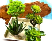Succulent Pick - Faux Succulents ~ 4 different choices at checkout ~ Great for Fairy Gardens ~ Plants with Pick ~ See Details for sizes