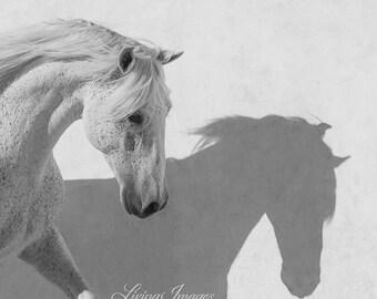 The White Stallion Dances with Shadows II - Fine Art Horse Photograph - Fine Art Print - Horse - Lusitano