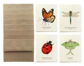 Insects - Set of 8 Plantable Seed Greeting Cards