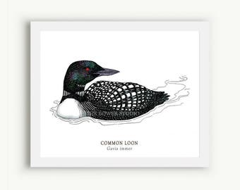 Loon Print - Unmatted