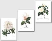 Botanical Print Set SALE (White Room Decor, White Flower Art, White Nursery Decor, White Wall Art) Redoute Set of 3 Prints