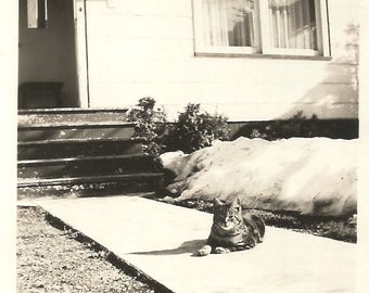 "Vintage Snapshot ""Muffin"" Kitty Cat Sunny Spot Kittens Cats Tabby Cat Found Vernacular Photo"