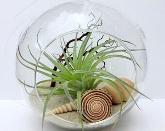 """Air Plant Terrarium in Glass 5"""" Orb Beach Scene"""