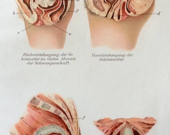 Vintage 1907 German Medical Anatomy Diagram Bookplate UTERUS WOMB Female Anatomy Reproductive System