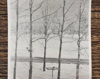 Original Vintage Photograph Bare Trees