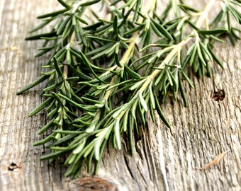 Hardy Hill Rosemary Plant, Herb Garden, Rosemary Plant, Herb Plant in 4 Inch Nursery Pot, Great for Container Gardens