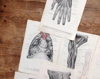 Vintage Anatomical Medicine Prints Anatomy Latin Human