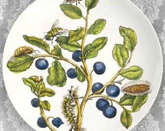 Blueberries melamine plate