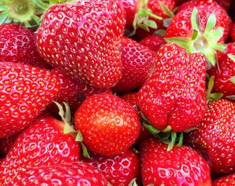 Close-up of Red Strawberries Kitchen Fine Art Print