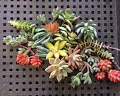 Succulent WEDDING FAVORS, Succulent Cuttings, Succulent Plants, Centerpiece, Garden, Mothers Day Gift