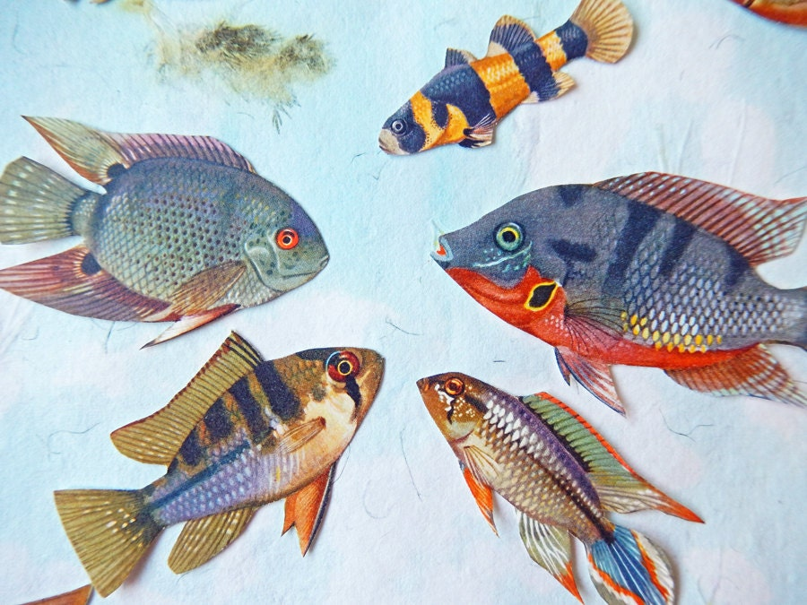 Fish Die Cut Style Embellishments Scrapbooking