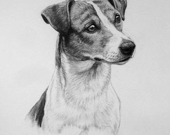 Jack Russell Terrier Rat Terrier dog art dog print fine art Limited Edition print from an original charcoal drawing by H Irvine