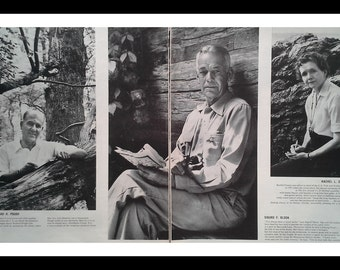 Lot 4 pages American Naturalists Eco Fighters- Rachel Carson, Murie, Pough, Teale, Errington Posed Pics.  Animal Rights.  Ready for Framing.