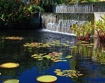 The Naples Botanical Garden I (FREE SHIPPING in the U.S. only)