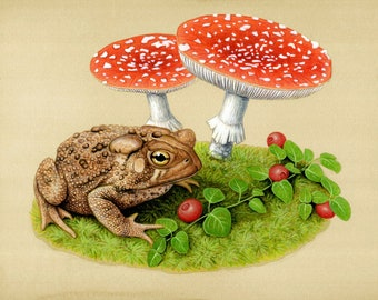 American Toad - 8x10 inch print by Matt Patterson, toad print, natural history decor